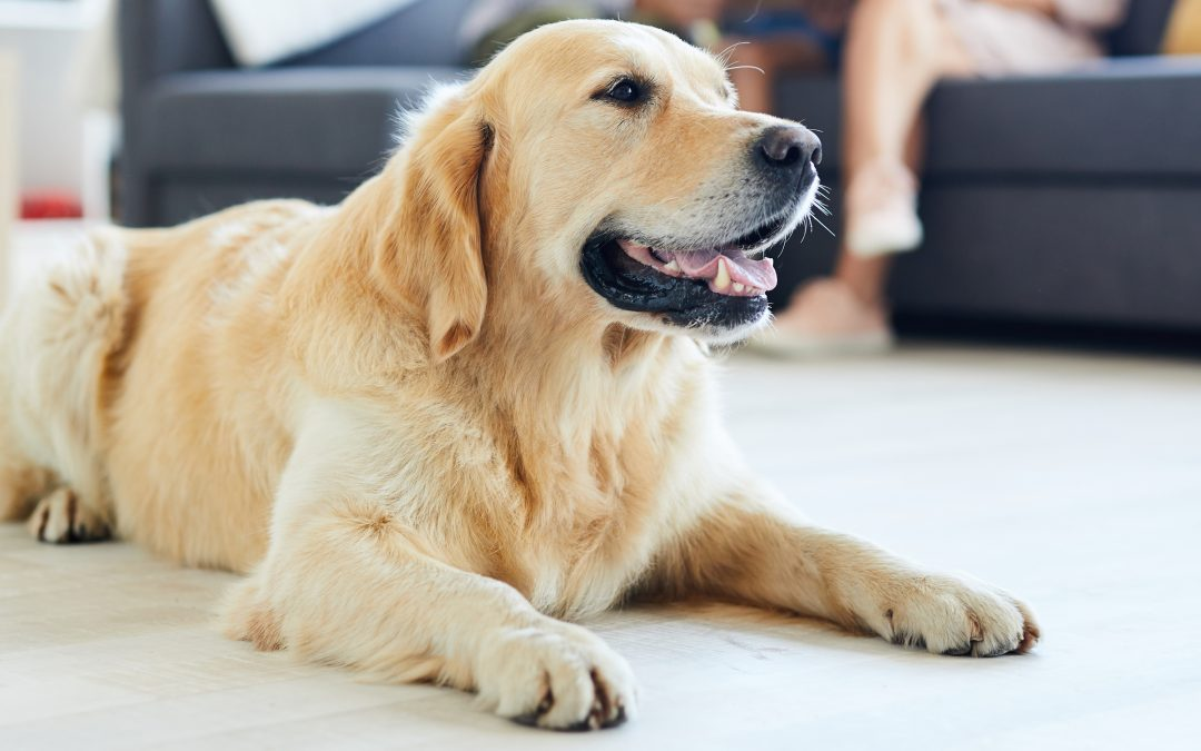 Recognizing Pain in Your Pet