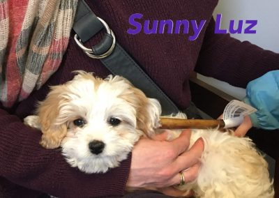 Sunny Luz