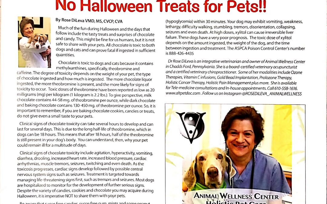 No Halloween Treats for Pets!!